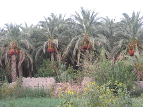 روستای قلعه عسکر بم کرمان