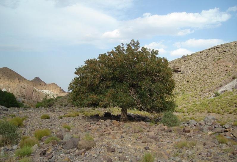 منطقه حفاظت شده کوه شیر بم کرمان