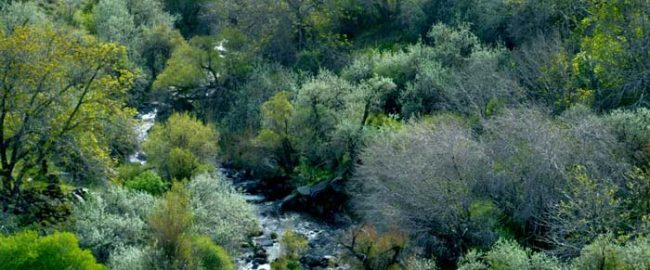 دهبکری بم کرمان